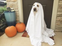 Top 5 Easy DIY Dog Halloween Costumes