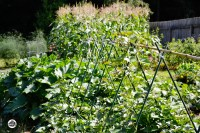 Planning for a Fall Vegetable Garden