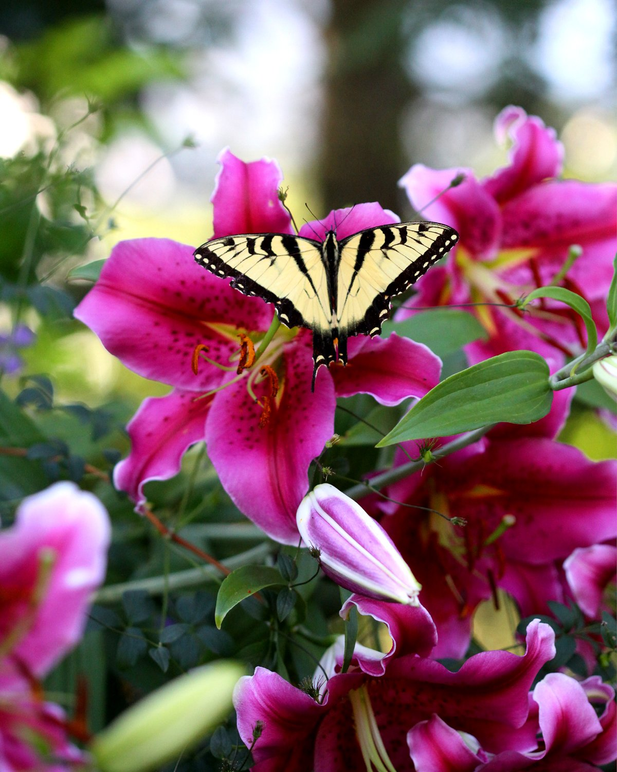Beautiful Pictures Of Flowers And Butterflies Birds Beautiful Pictures Of Flowers And Butterflies Birds