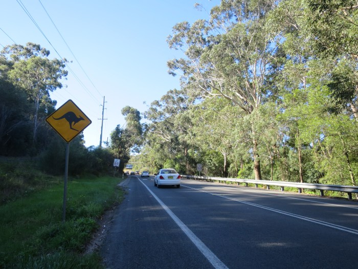 Australia Road sign kangaroo
