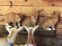子猫ズと子ヤギたち。お互いに興味津々なほのぼの動画。