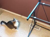 うちの猫がいつも飛び乗るガラスのテーブルトップを取り外してみたらwww