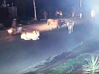インドでは道路にウシがいたことが原因で1年間に100人以上が亡くなっているらしい。