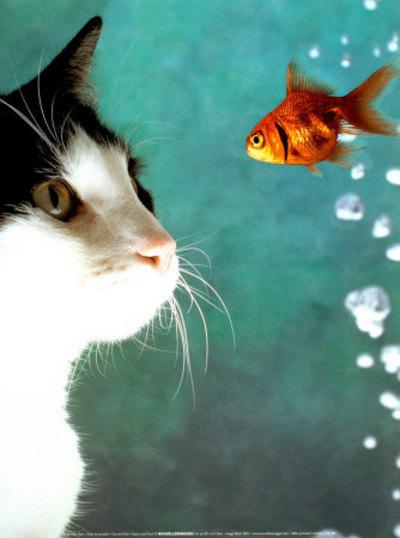 Uccide il gatto cuocendolo nel microonde