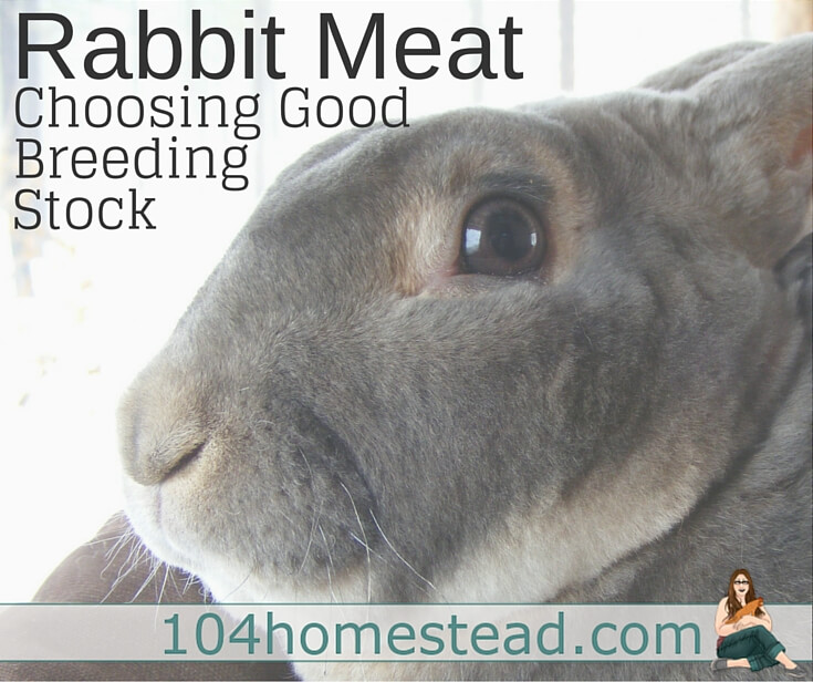 Choosing Breeding Stock for Rabbit Meat