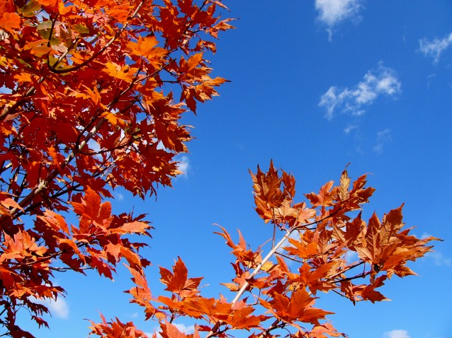 Fall Leaves Iphone 7 Wallpaper Autumn Sugar Maple Sky Pete Brown S 10rem Net