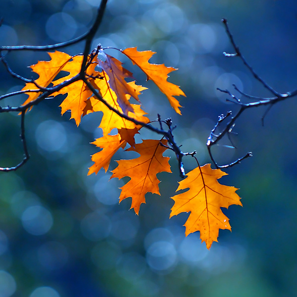 Free Fall Season Desktop Wallpapers Beautiful And Colorful Autumn Leaves Photography