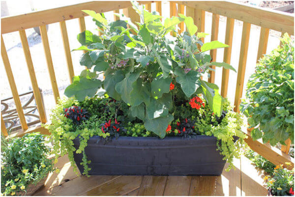 125 Container Garden Ideas And Tips For Garden Pots And
