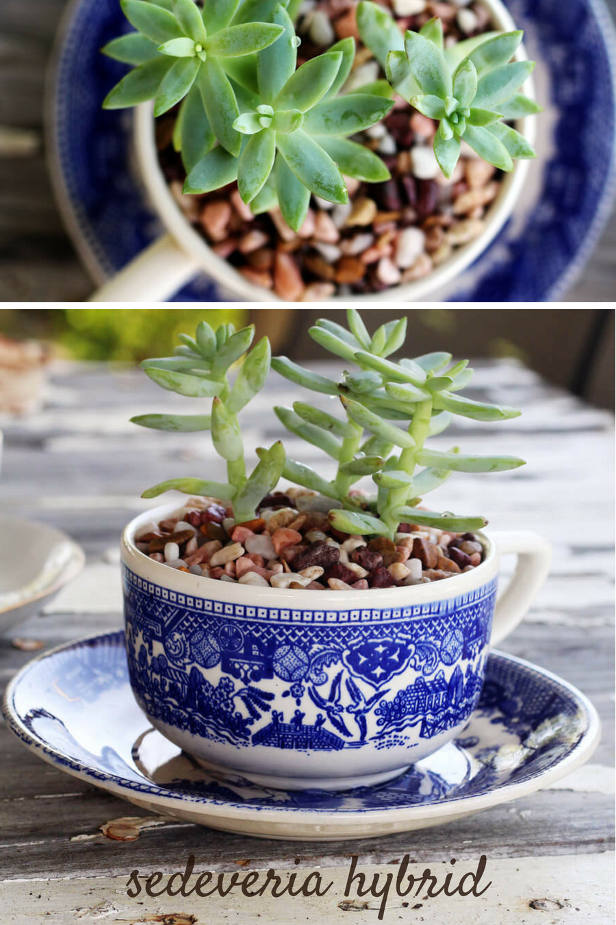 Large Tea Cup Planter The Sweetest Tea Cup Succulent Planters Buy This Cook That