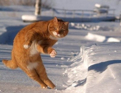 http://media.picfor.me/0016BCE/Bellflower-funny-animals-dansing-cat_large.jpg