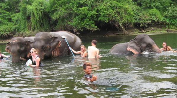 【泰國|北碧】這一次換你來服務大象!ElephantsWorld 大象世界