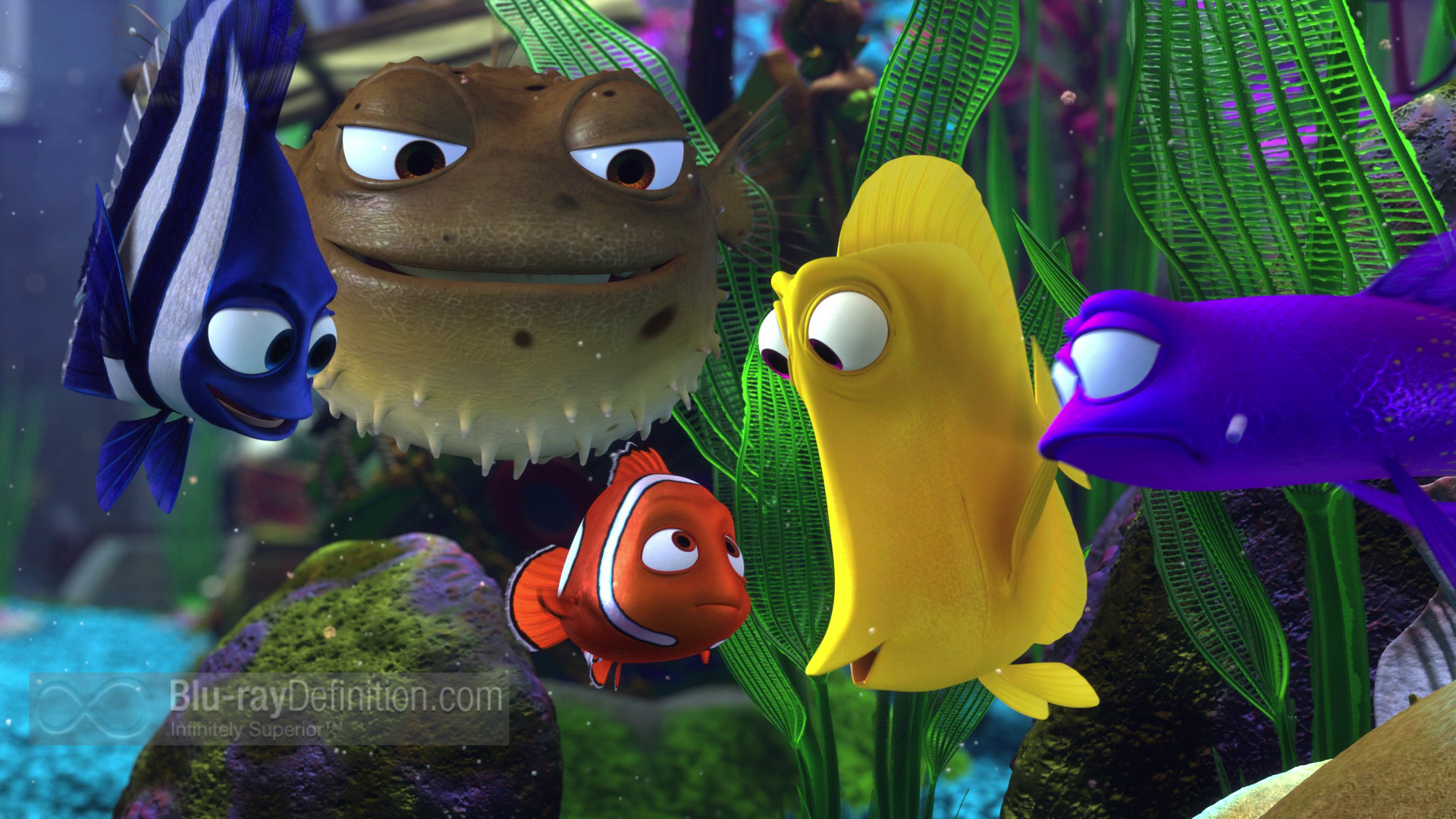 Animated Fish Tank Wallpaper Finding Nemo Ultimate Collector S Edition Blu Ray 3d