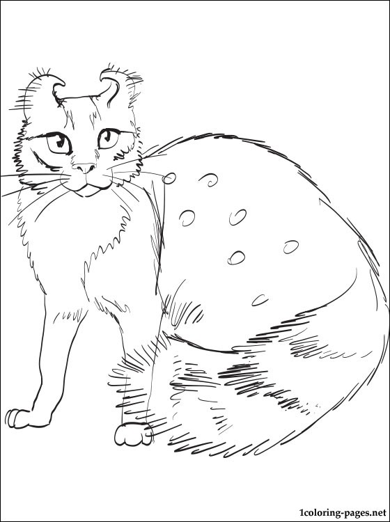 American Curl cat coloring page Coloring pages - Culring Pajis