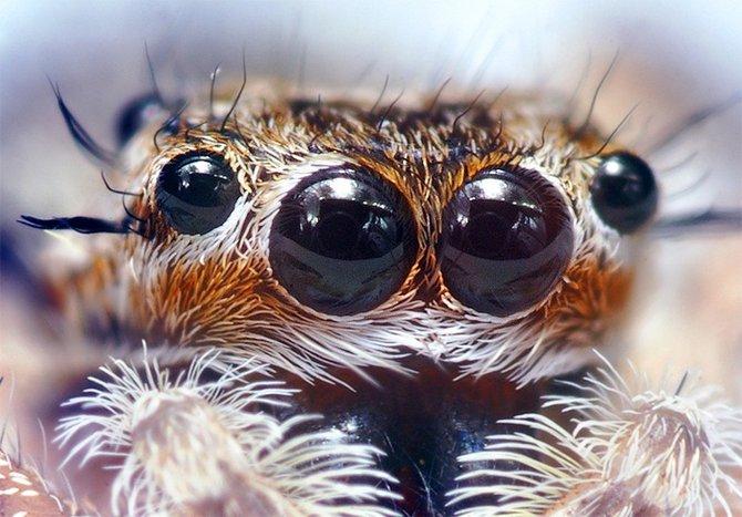 Incredible Insect Macro Photography. Photographer Thomas Shahan