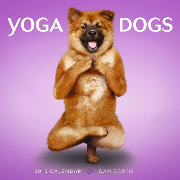 Yoga Dogs Calendar!