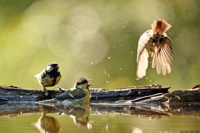 Photo of Animals… Photographer Sandor Bernath