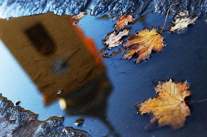 Nature Life… Photographer Samir Kurtagic