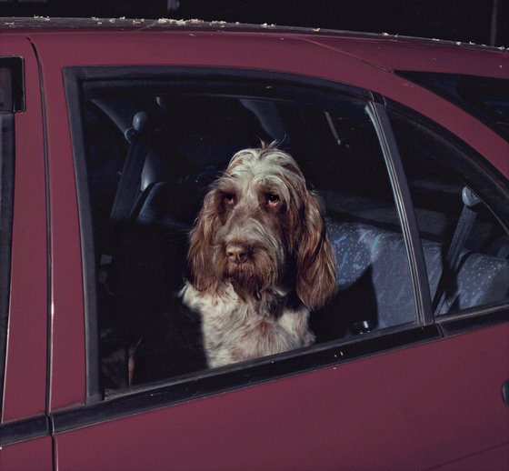 The Silence of Dogs in Cars… Photographer Martin Usborne