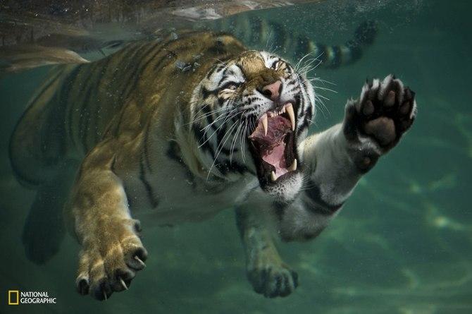 Wild Animals by Mukul Soman