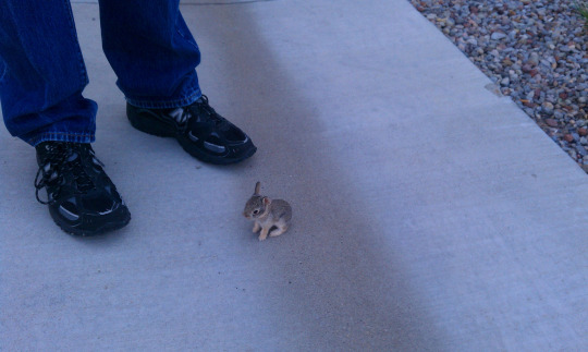 The Smallest Bunny Ever
