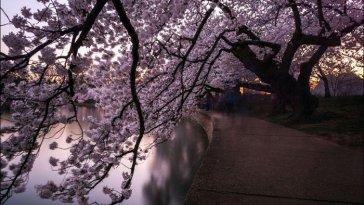 Spring-in-Japan-13