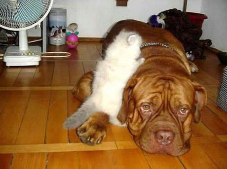 catanddogstories05jx65.jpg