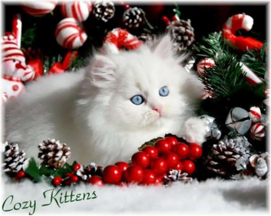 Cute Kitty Wallpaper Desktop Cute Christmas Kittens 26 Pics 1funny Com