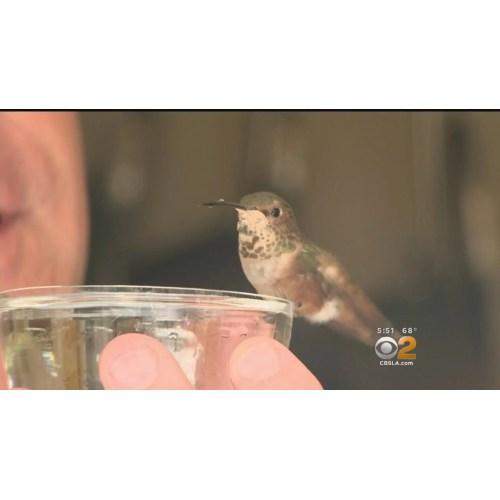 Medium Crop Of Where Do Hummingbirds Sleep