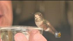 Small Of Where Do Hummingbirds Sleep