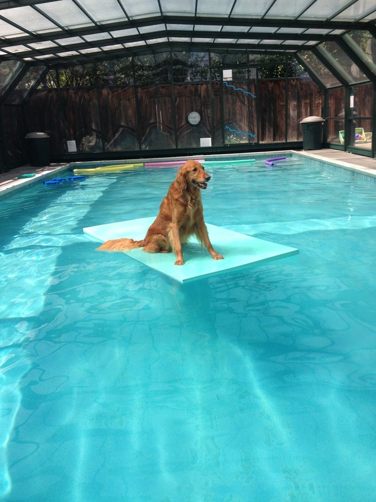 Zwembad Goes Swimming Pools For Dogs Style - Pixelmari.com