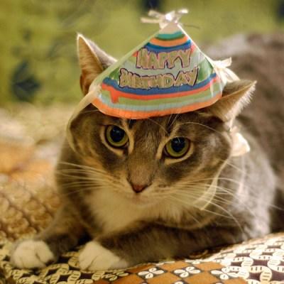 keizo:   hyam:   rob-art:  iskw: Today Bumbe turns 4 years old! (via bumbe)