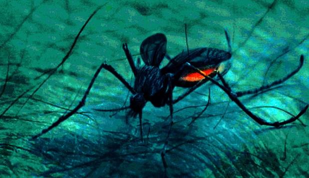 Mosquito_HI