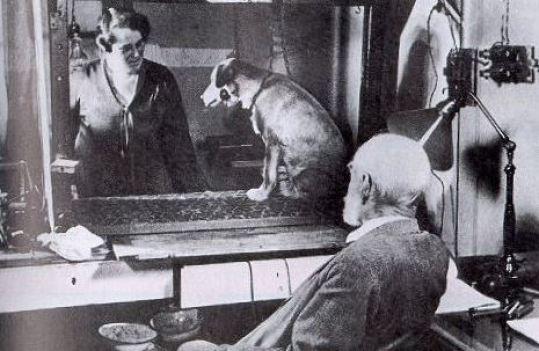 1-Pavlovs-Dog