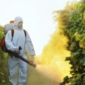 Not All Bad: EU May BAN Monsanto Weedkiller Over Health Concerns