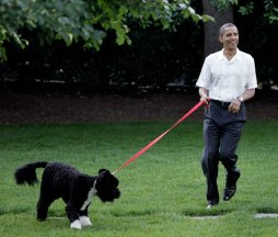 pictures-president-obama-dog-congressional-picnic