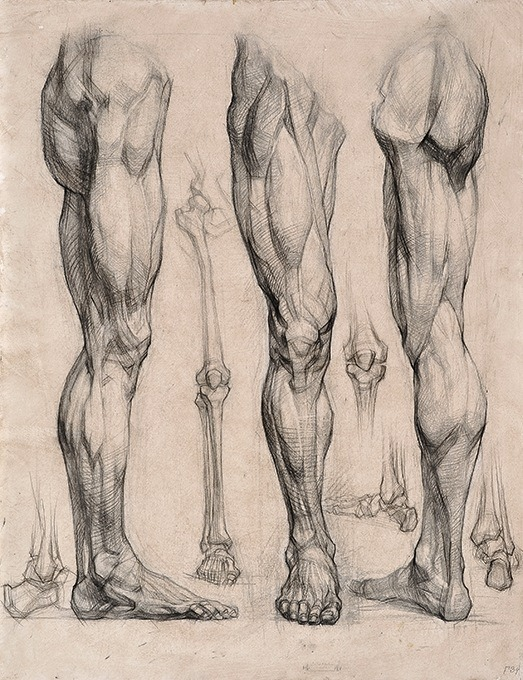 117 best male ref images on Pinterest Human anatomy, Anatomy - character reference template uk