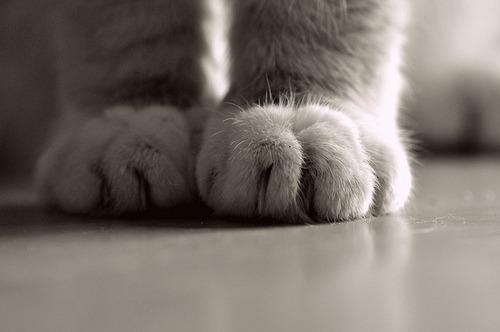 Cute Cat Wallpapers Kitten Cat Cute Kitten Paws Kitties Artsy Imsensitive
