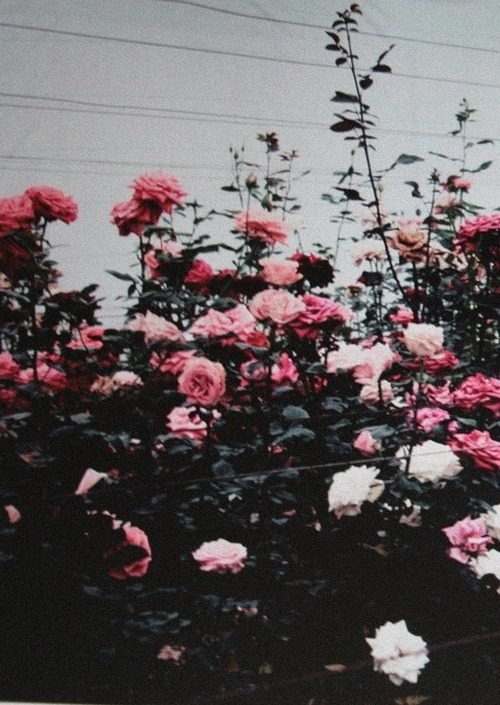 Bryson Tiller Wallpaper Iphone Flowers Scenery Weheartit Vertical Blunts Over Everything
