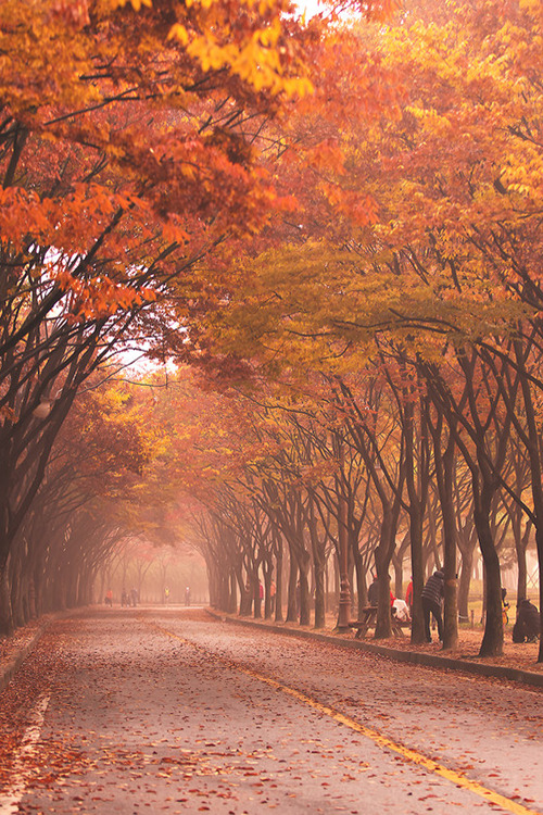 Cat In Fall Wallpaper Background Photography People Landscape Korea Fall Nature Scenery