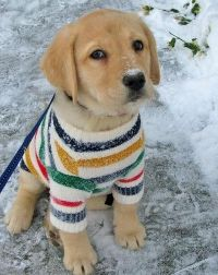 adorable puppies cuteness cute puppies adorable puppies ...