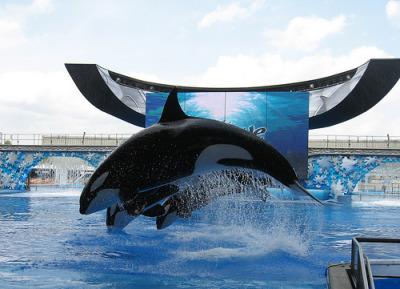 whale dork