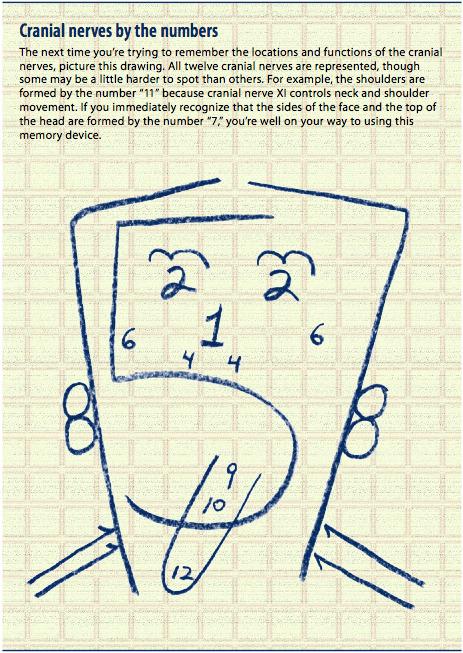 Tutorials C Programming Quiz Arrays Cprogramming Cranial Nerves Speechymusings