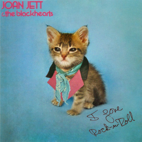 Joan Jett and the Blackhearts cover with kitten