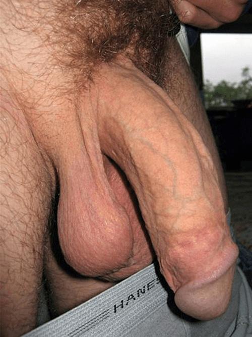 Big limp dicks