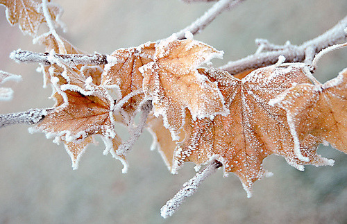 Ice Fall Wallpaper Snow Winter Cold Ice Fall Autumn Frost Lead Breakfromsanity