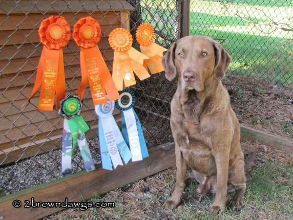 2011 New AKC Senior Hunter And HRC Seasoned Hunter