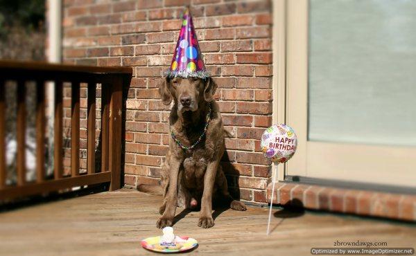Thunder With His Birthday Treats