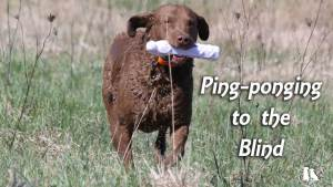 Ping-ponging To The Blind