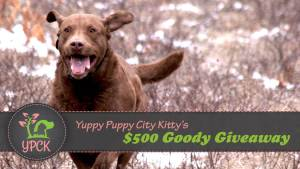 Yuppy Puppy City Kitty Giveaway