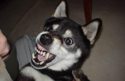 犬ヤバい ニュースレポーターがイヌに噛みつかれる衝撃映像が話題 40,000回再生のヒット(動画有)